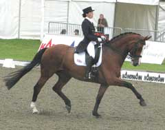 dressage horse ridden in a double bridlewith curb